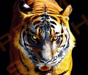 Tiger Khanda Face