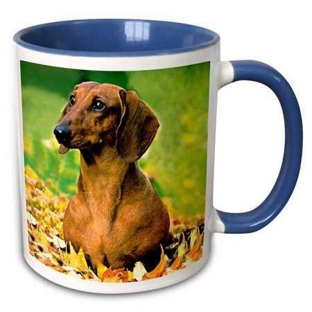 drose smooth dachshund  tone blue mug  ounce