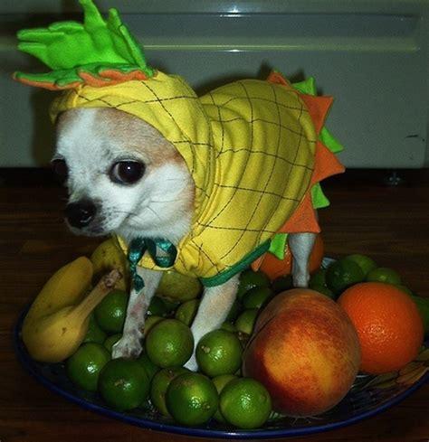 los mejores disfraces  perros perros amigos