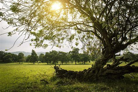 Natureza Ensolarado Pôr Do Sol · Foto gratuita no Pixabay