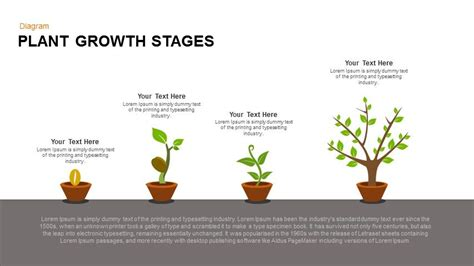 Plant Growth Stages Powerpoint And Keynote Template Slidebazaar