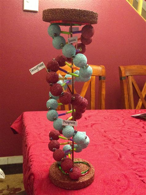 double helix biology project   grade dna modell