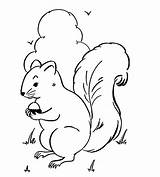 Squirrel Coloring Pages Printable Nest Template Animal sketch template