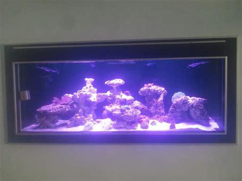led aquarium lighting blog orphek client shows off his