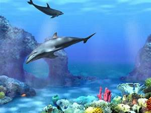 Animated Dolphins wallpaper ~ Wallpaper