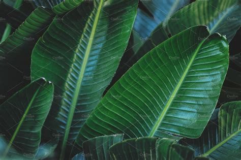 Large Green Tropical Leaves  Nature Photos  Creative Market
