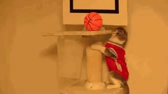 basketball cat 7 best cat gifs of the week 13th december 2014
