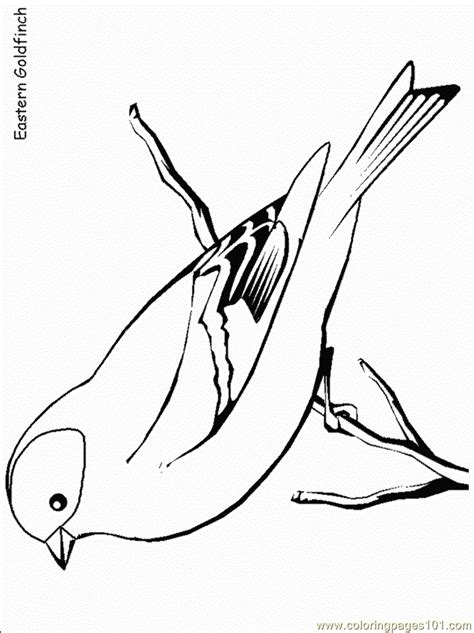easterngoldfinch coloring page  finch coloring pages coloringpagescom
