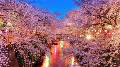 Cherry Wallpapers Blossoms Blossom 4k Cave Resolution