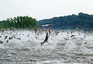 Asian carp jumping into boats