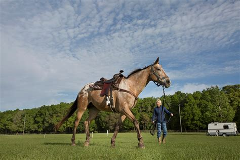 florida riding trails horse equestrian horseback centers west country beach rides key horses park shows dog visitflorida