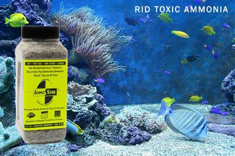 fish smells like ammonia ammosorb eco aquarium ammonia removal granules odor eliminator