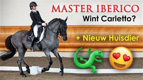 Trots! Mijn Barokke Paard Wint Tussen De Moderne