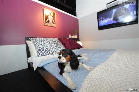 chambre pour chien vienne des chambres d 39 hôtel de luxe pour les chiens