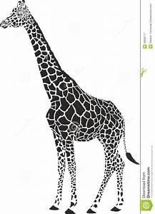 Giraffe black and white stock vector. Illustration of wild ...
