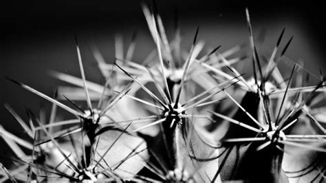 hd close nature plants cactus thorns hd pictures wallpaper