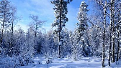 Forest Winter Snow Much Widescreen Wallpapers Resolutions