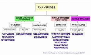 Virus Classification Chart