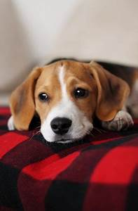 1000+ images about Pets on Pinterest | Puppys, Homemade ...