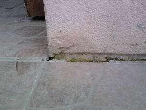 comment reparer des joints de terrasse With joint de terrasse exterieure