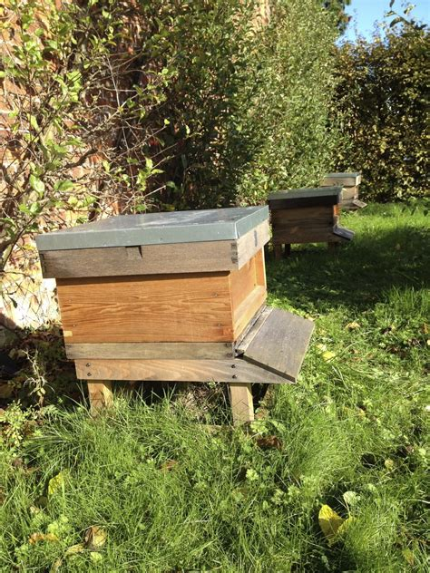 Urban Beekeeping Tips Learn About The Benefits Of