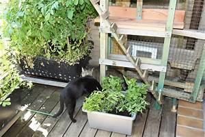 Heimische Pflanzen Für Den Garten : katzenpflanzen f r den eigenen garten pflanzen wissen ~ Michelbontemps.com Haus und Dekorationen