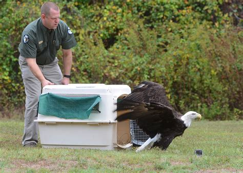 use caution with sick or injured wildlife mississippi