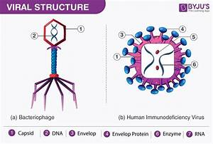 What Are Viruses Discover The Classification And Wiring Diagram