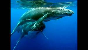 Close-up Humpback Whale mum and baby - YouTube