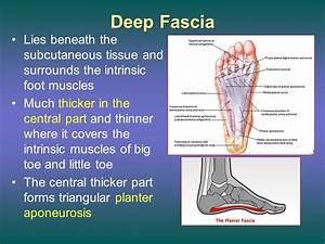 The Sole of the Foot (the planter aspect of the foot) Dr ...