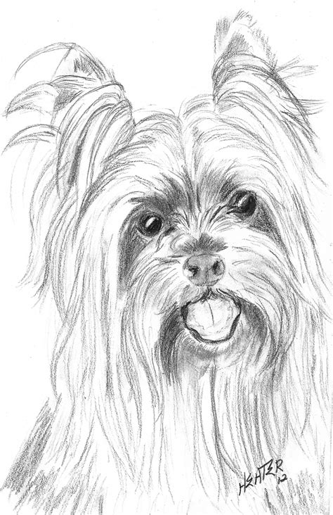yorkie drawings   drawing challenge  click
