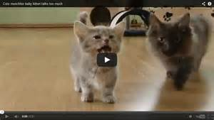 Talking Kitty Cat Kittens