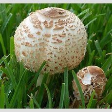 Pilze — Aber Welche Sind Das? Sind Die Giftig? (essbar