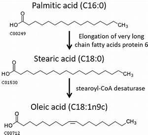 Fatty Acids In Veterinary Medicine And Research