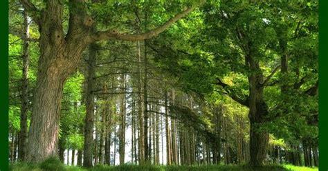 gambar pemandangan hutan ideas   house pinterest