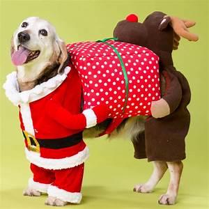 Tenue De Pere Noel : d guisement pour chien p re no l rudolphe ~ Farleysfitness.com Idées de Décoration