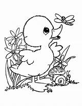 Coloring Duck Pages Popular sketch template