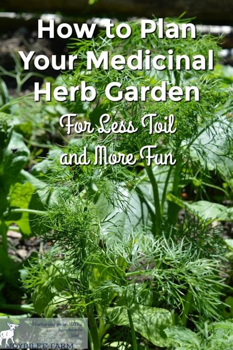 How To Plan Your Medicinal Herb Garden For Less Toil And