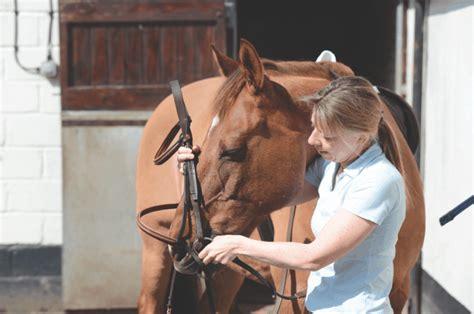 horse bit horses
