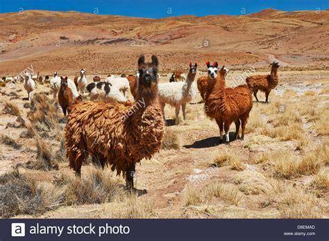 herd auf englisch herd auf englisch herdplatte herde back fen und