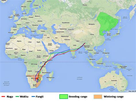 tracking  incredible journey   amur falcon conservation india