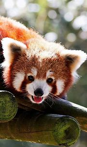 17 Best images about Animal Wallpaper for iPhone on ...