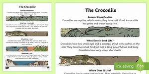 The Crocodile Information Report Writing Sample