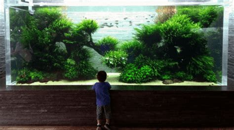 How To Make Aquascape by How To Create A Beautiful Aquascape Aquaristic