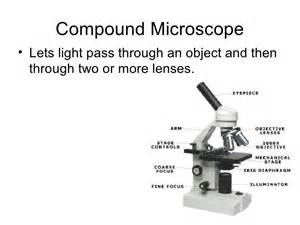 Compound Microscope Parts and Their Functions