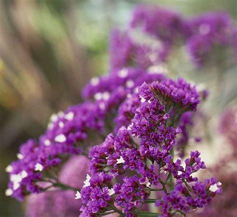 perennials for southern california no fail perennials of southern california white flowers names and plants