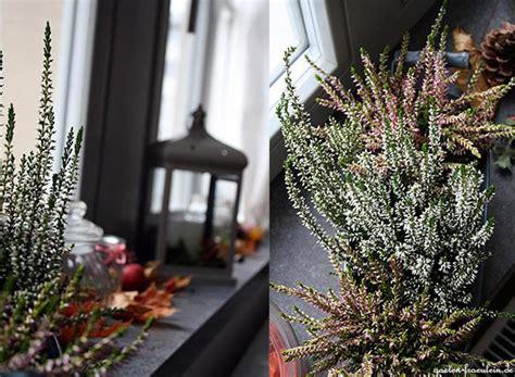 Herbstdeko Auf Der Fensterbank by Herbst Auf Der Fensterbank Garten Fr 228 Ulein Der Garten