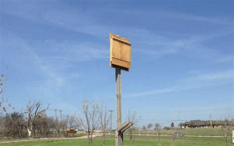 build  bat house bat house plans   homestead