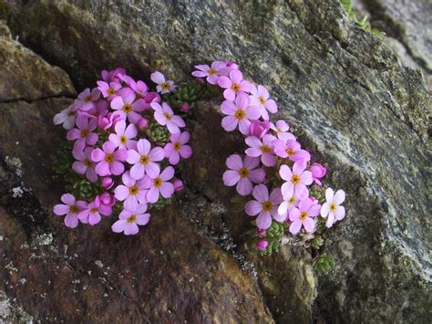plants of mountains mountain plant boundary can help monitor climate change environmentalresearchweb