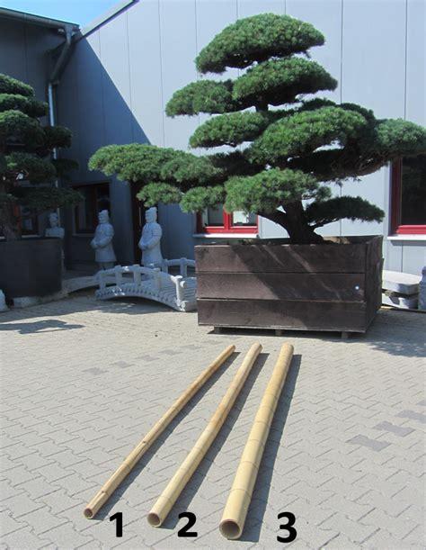 wwwjapangartende der gartenbonsai shop produkte